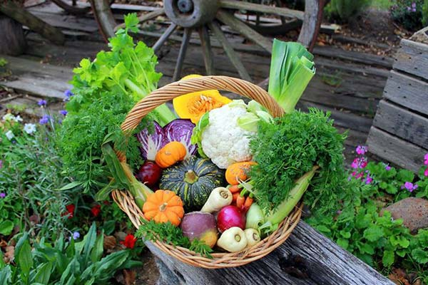 Harvest Basket of Fresh Vegetables